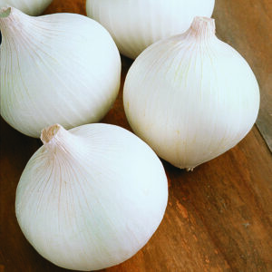 ONION- White Fresh 5lbs